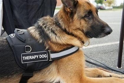 German shepherd therapy training