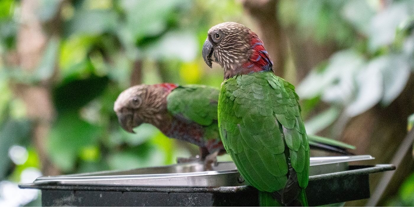 5-most-colorful-and-beautiful-Parrot-species