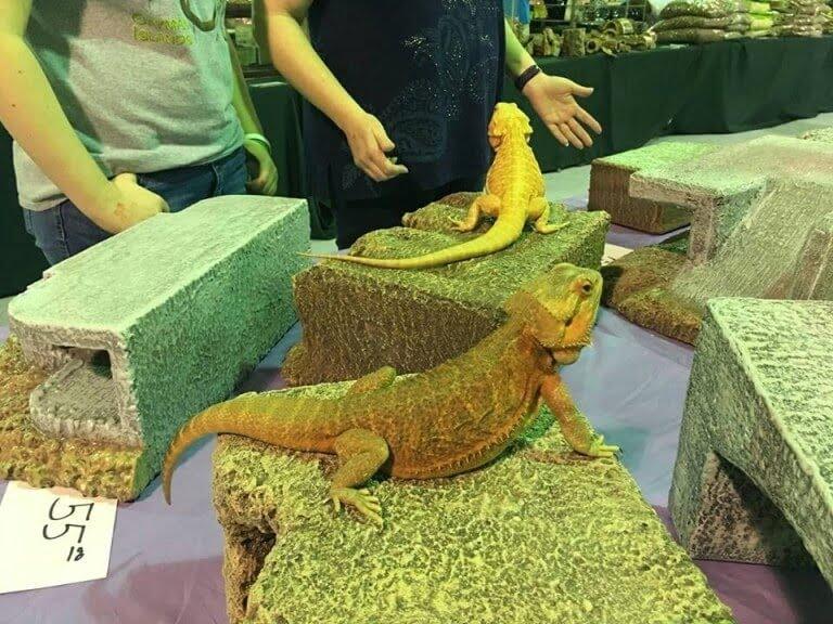 Reptile show enterance