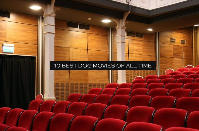 10 Best Dog movies of all time.
