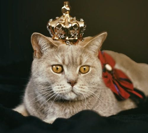 10 best cat pictures with their biography