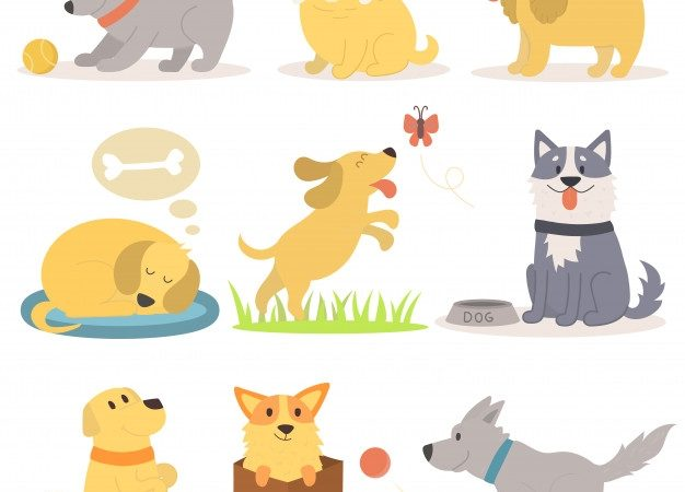 Various  types  of pets that show your choice: