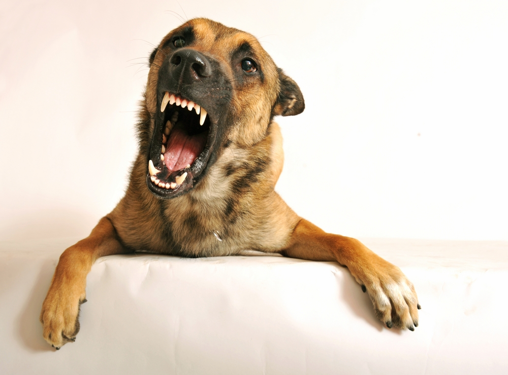 dog barking to communicate