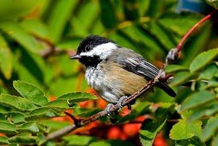 bird-species