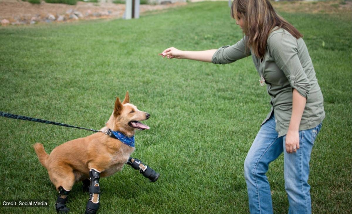 Rehab specialists with prosthetic dog