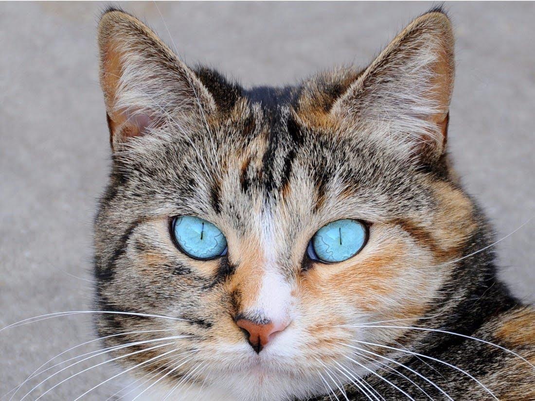 Cat-pupil-is-elliptical