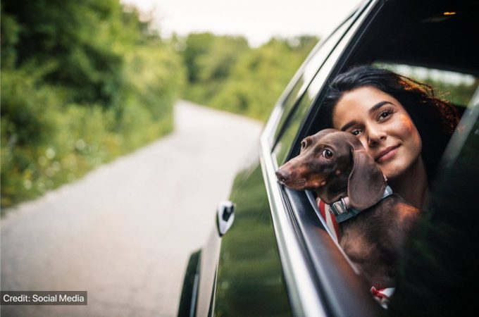 Uber Pet Service: Makes Travelling With Pets Easier