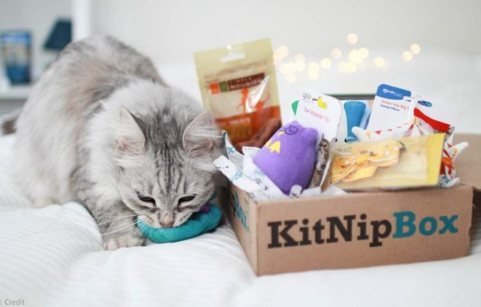Are You Looking for Varieties in Cat Subscription Box?