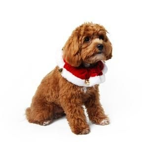 Christmas-Gifts-for-dogs-jingle-bells