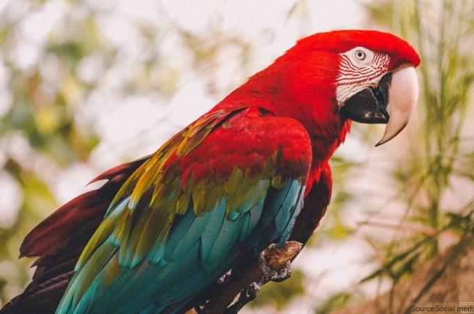 Colorful - Parrots