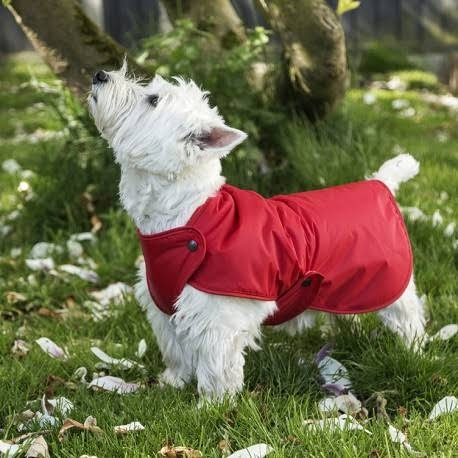 Luxury - dog - jumpers