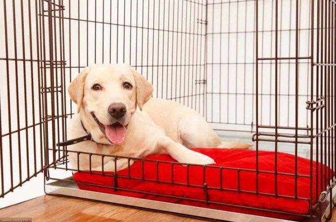 How Outdoor Dog Kennels Keep Your Dog Safe?