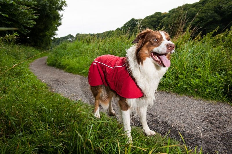 Ruffwear-Aira-Waterproof-Rain-Coat