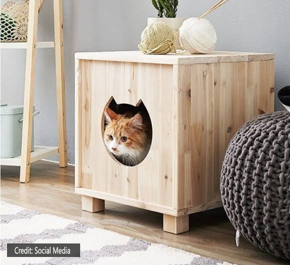 Shelter-for-cats-in-the-winter