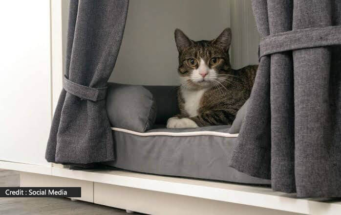 Shelters For Cats In The Winter