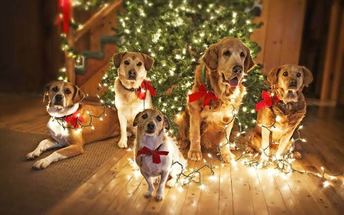 The Best Christmas Gifts for your dogs 2019