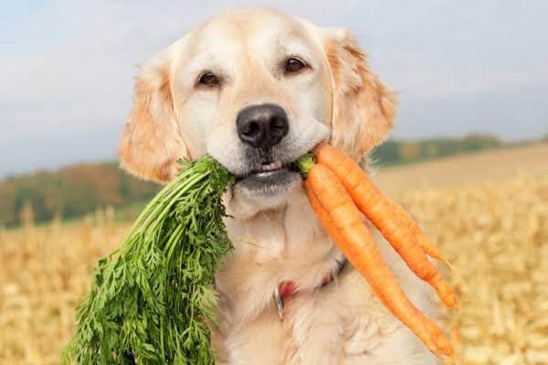 Vegetable for diabetic dogs