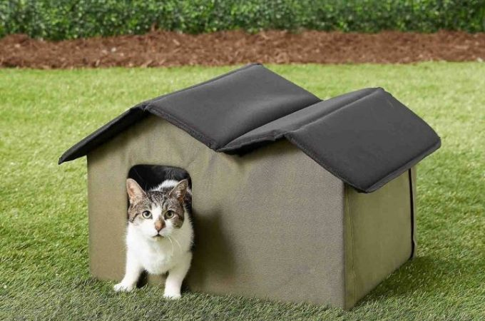 Do I Need An Outdoor Cat Shelter?