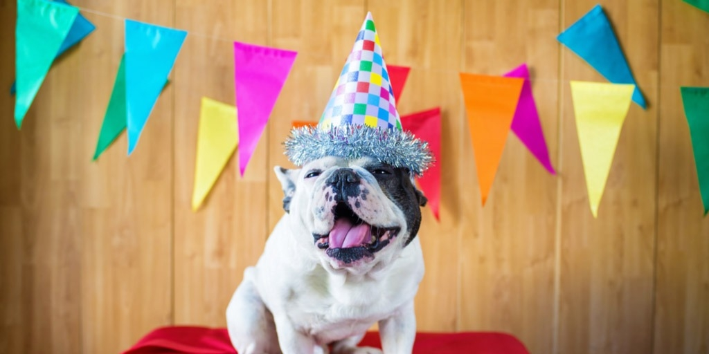 celebrate dog's birthday