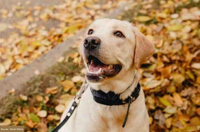 How To Choose The Best Dog Training Collar?
