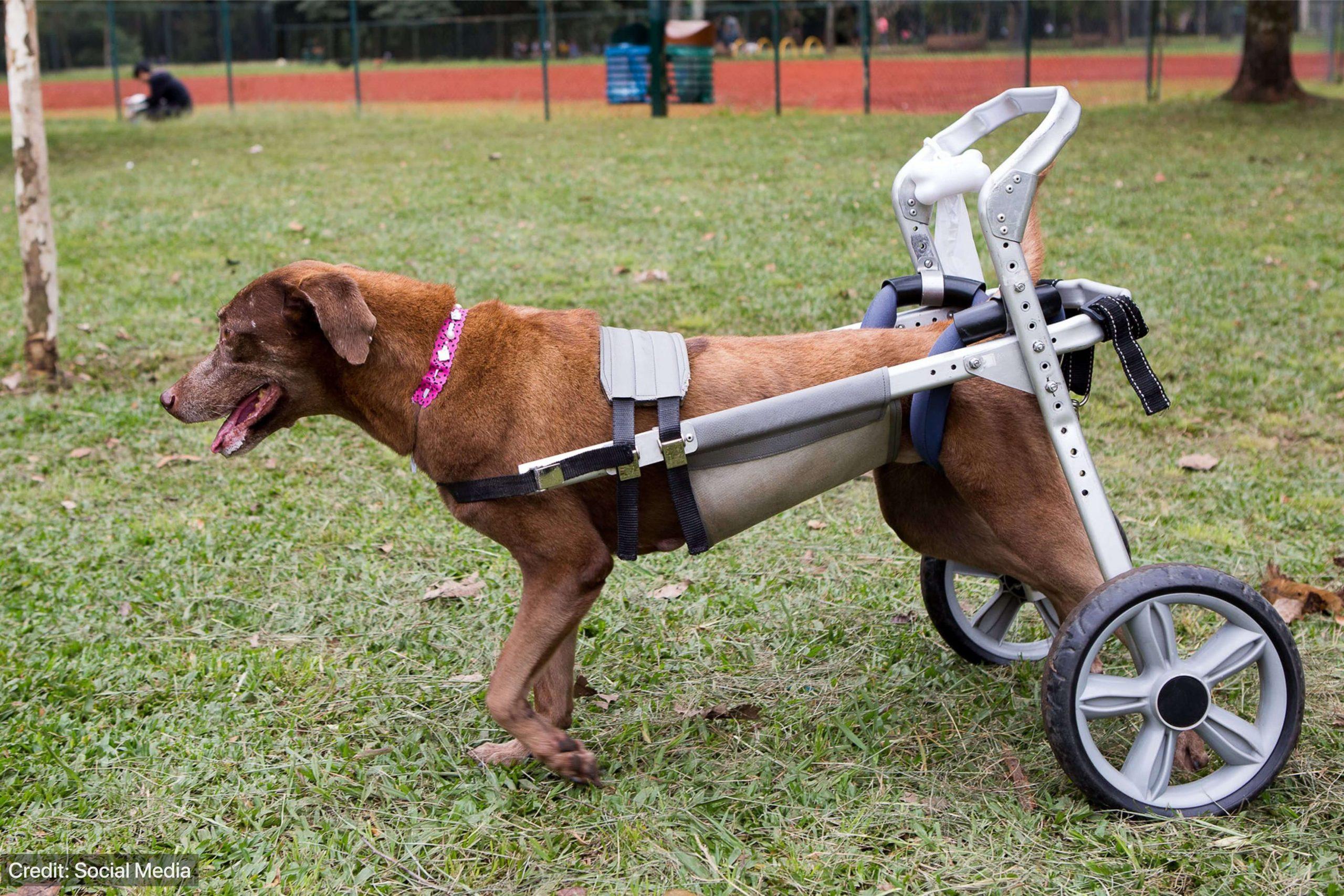 prosthesis for back leg