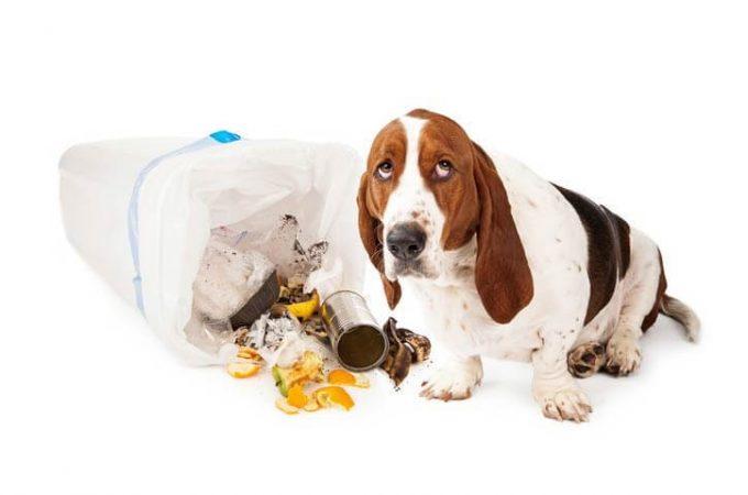 Dog Food Poisoning: A Major Health Concern?