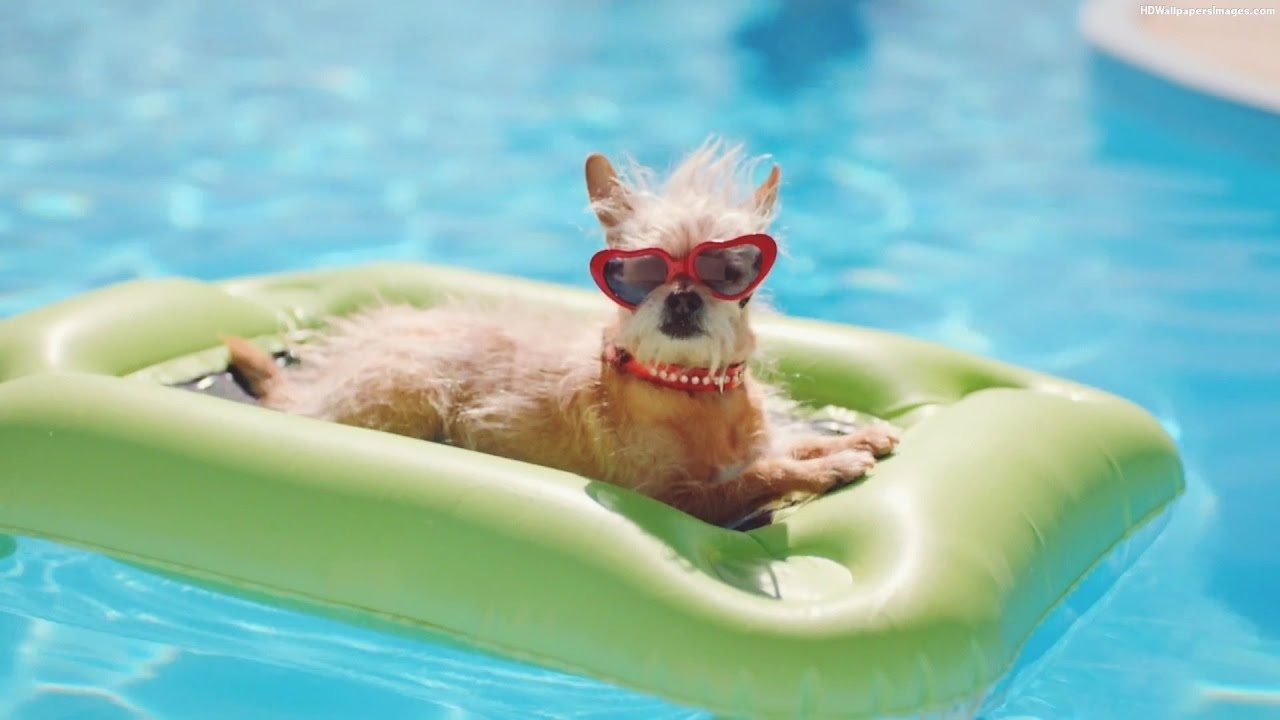 Dog in a swimming pool