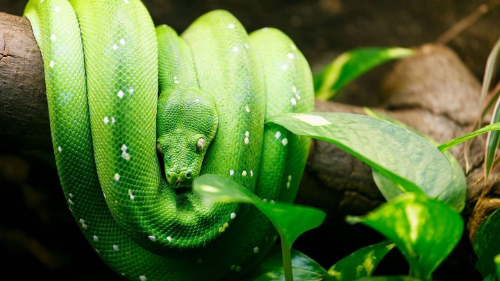 python-living-style