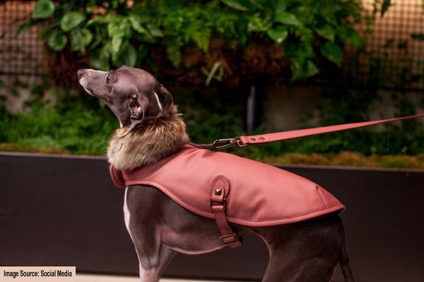 waterproof-dog-coats-that-keep-your-dog-dry