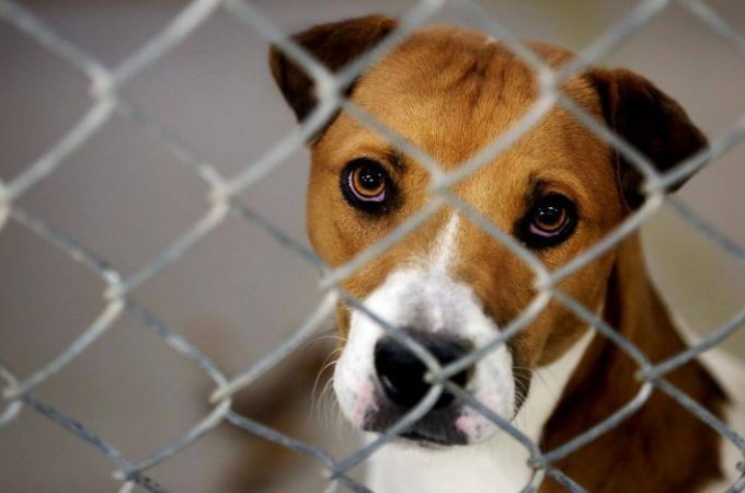 Why Dog Abuse Is Dangerous For Pet Health?
