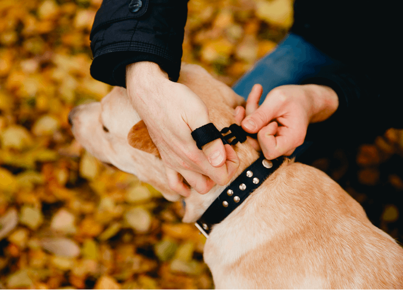 Remote-Dog-Training-Collars