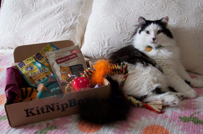 Cat Subscription Box – Why Should I Buy For My Cat?