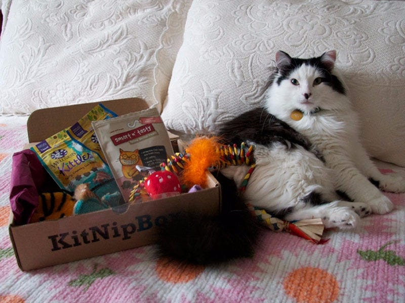 Cat - Subscription - Box