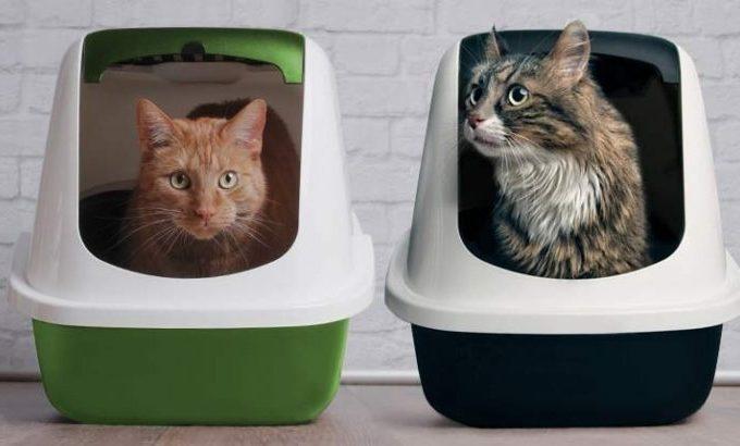 Non -Clumping -Cat litter