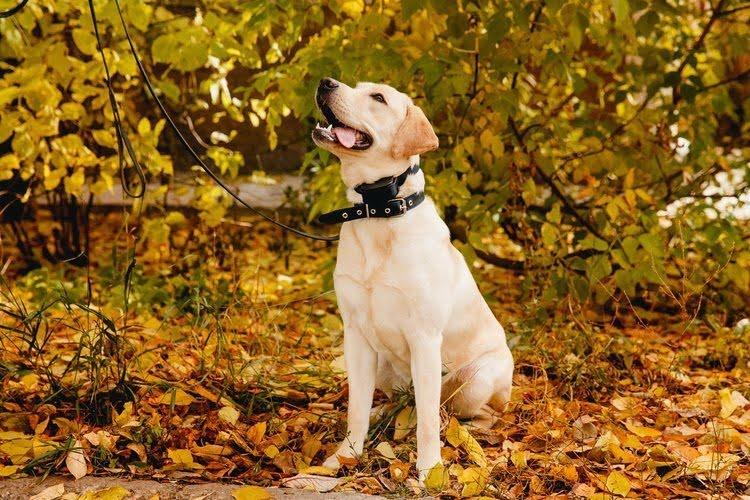Electric - Dog - Training -Collars
