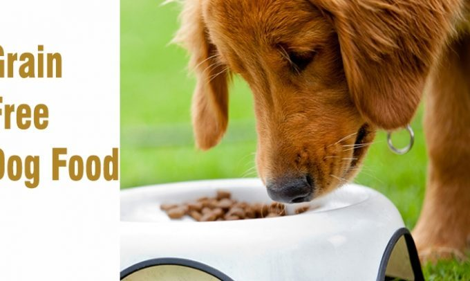 Grain Free Dog Food – Is It Beneficial Or Risky For Your Dog?