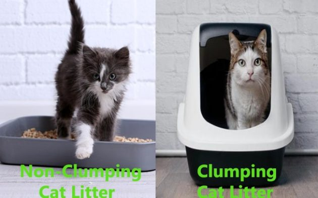 Non - Clumping - cat - litter