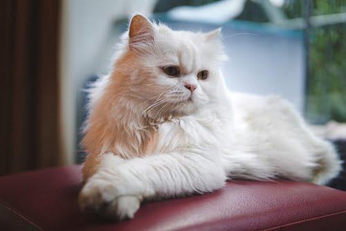 Non - Clumping - Cat Litter