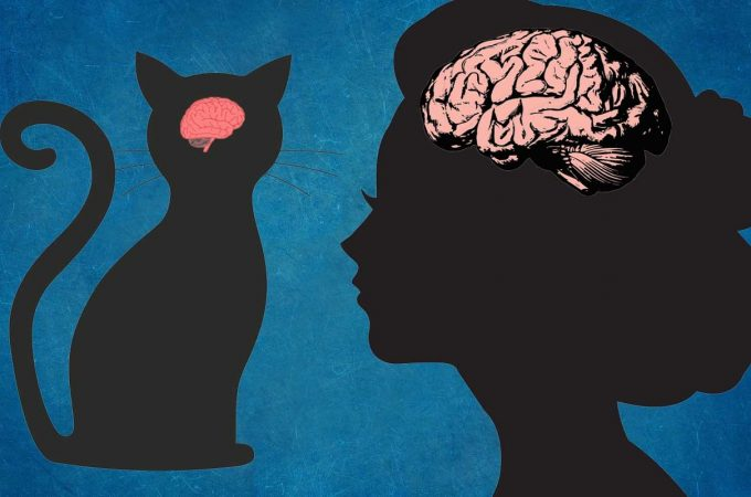 Cat Brain And Human Brain: What Are The Similarities And Differences?