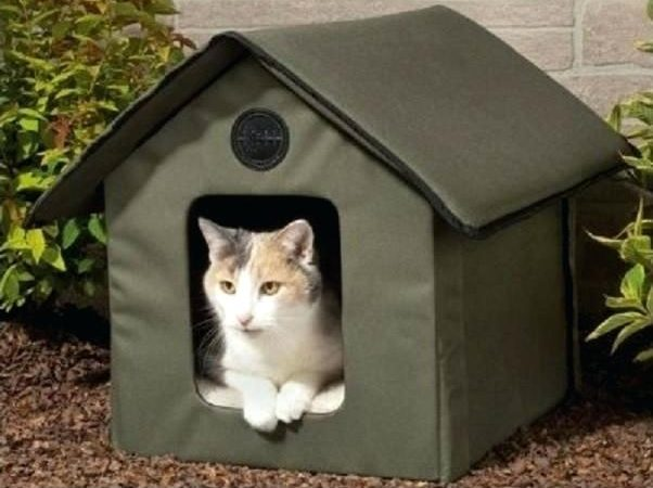 Feral Outdoor Cat Shelter – How Can We Save Our Cats In Winter?