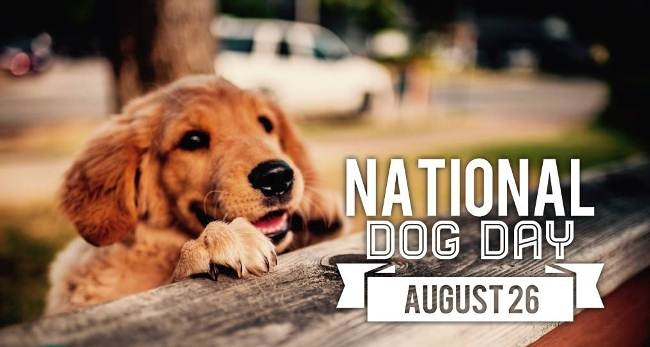 National -Dog - Day