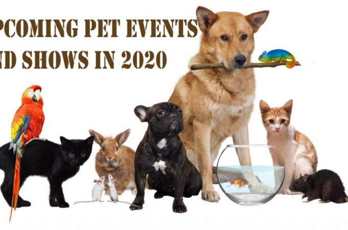Pet - Events