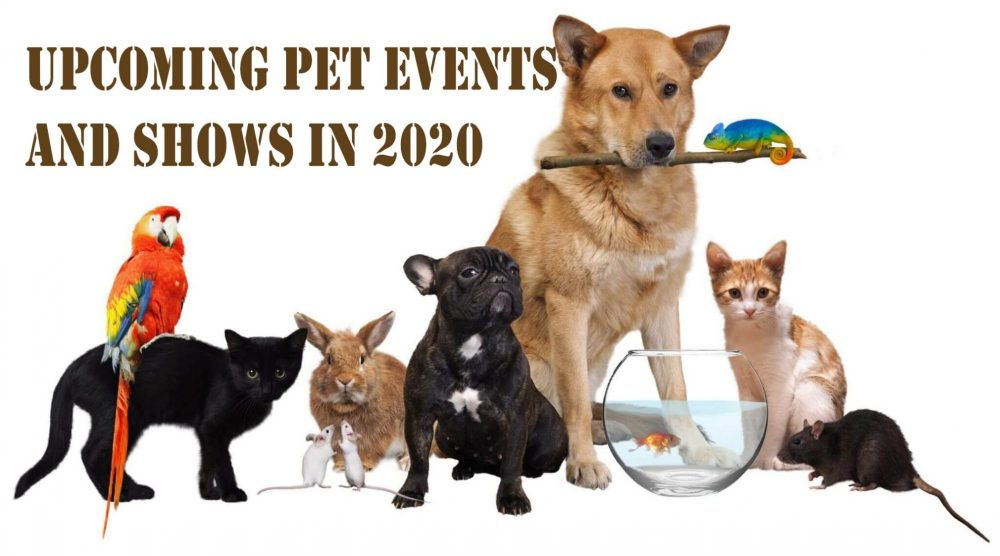 Pet - Events