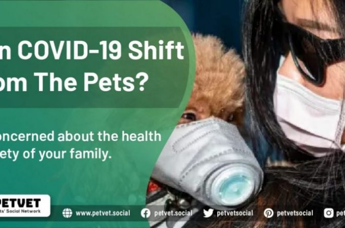 Can COVID-19 Shift From The Pets?