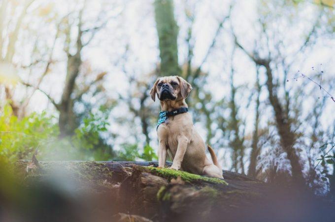 Meet 7 Amazing African Dog Breeds In 2020