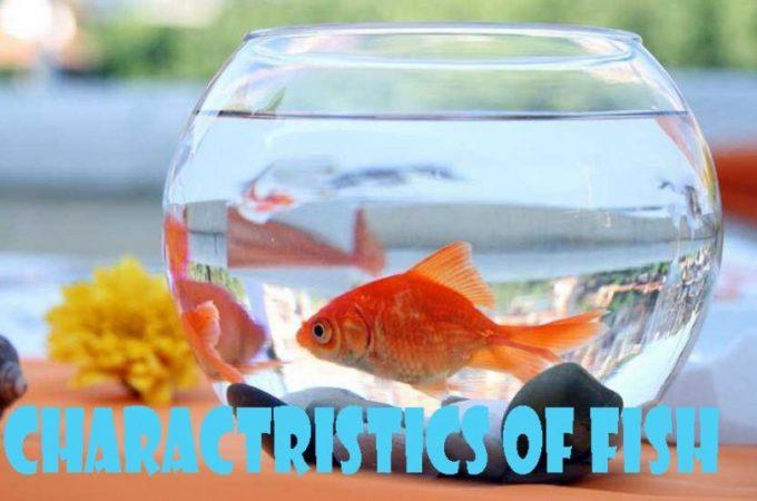 charactristics-of-fish