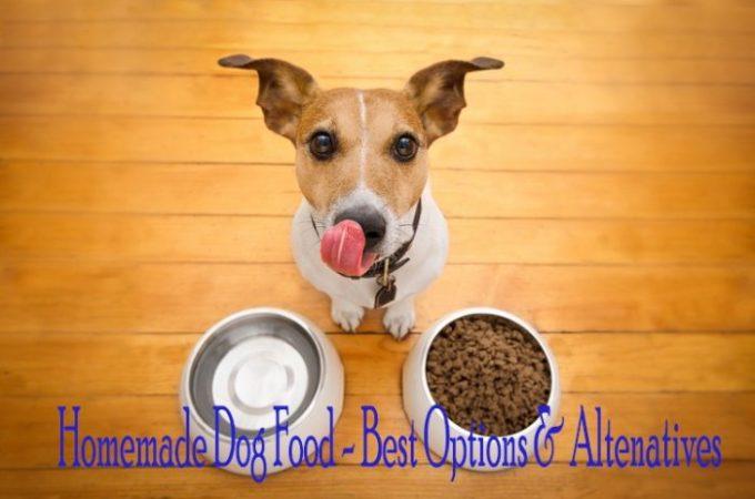 Homemade Dog Food Options – German Shepherd Husky Mix