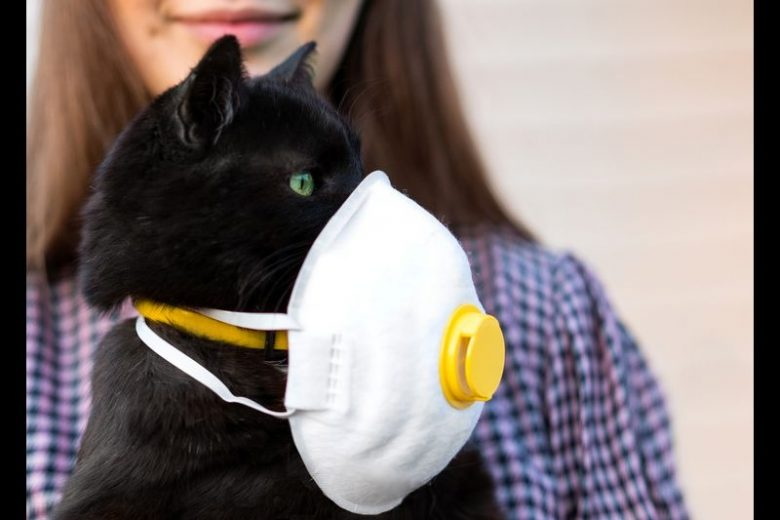 Activities To Keep Your Cats Healthy During COVID-19