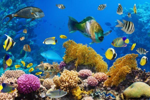 Common Characteristics Of Fish