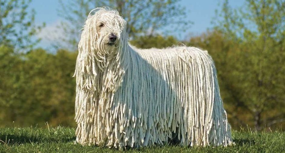 big-dog-breeds